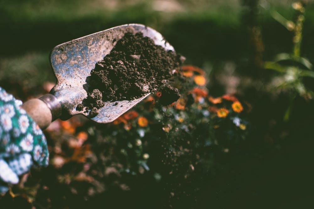 gardening in guyana