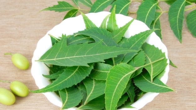 neem guyana