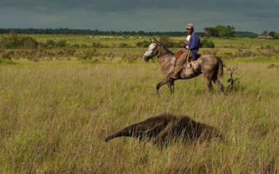 Seven of the world's largest animals found in Guyana